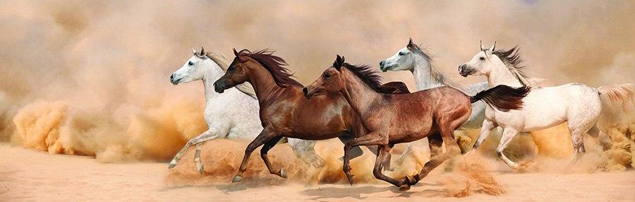 Схема для вышивки крестом «Лошади 11 » 100 Х 35