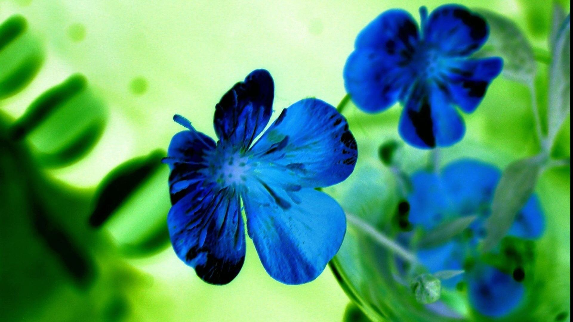 blue-flower-wide-hd-wallpaper-download-blue-flower-images-free