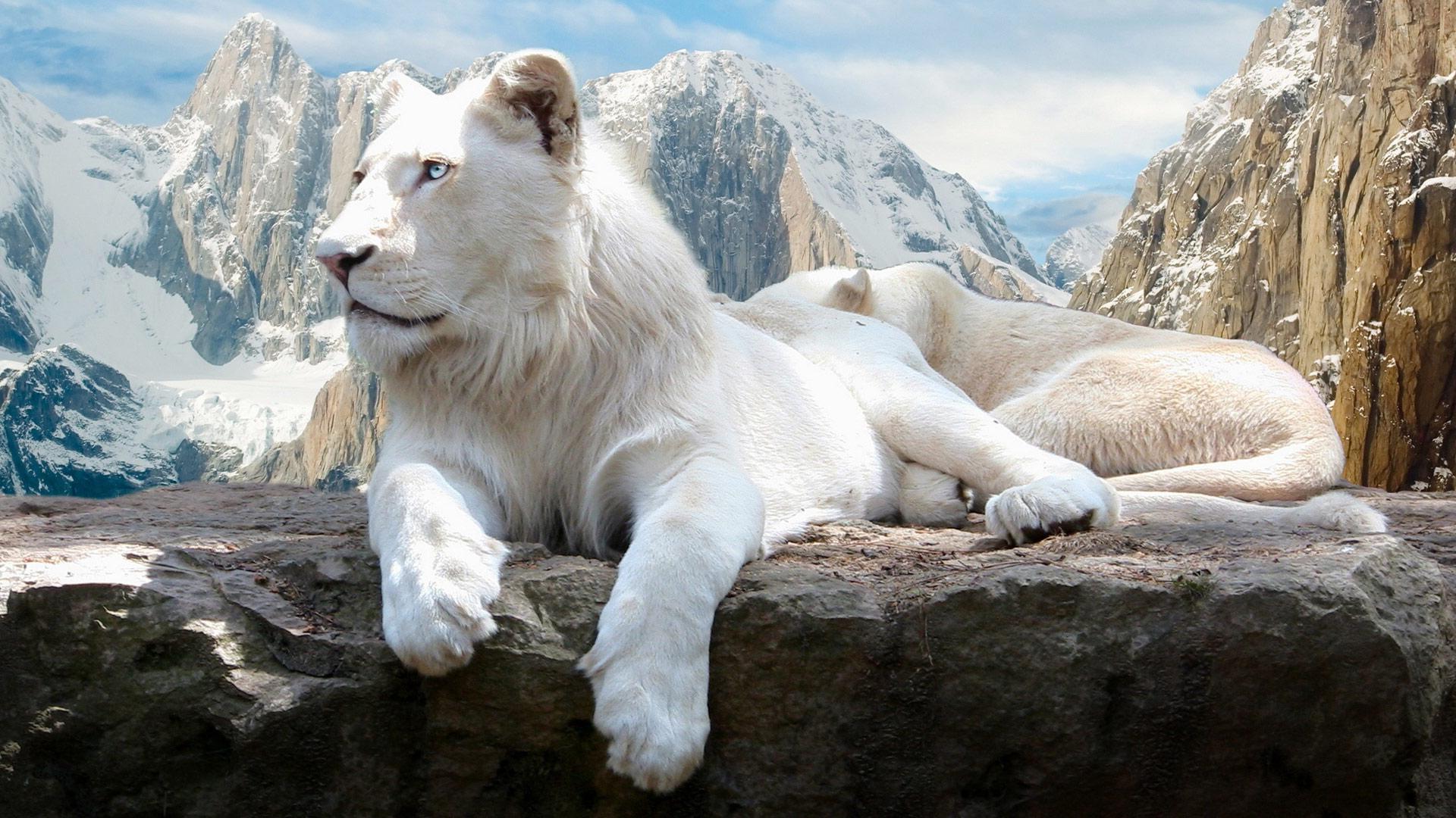 Схема для вышивки крестом «Белый лев » 70 Х 40